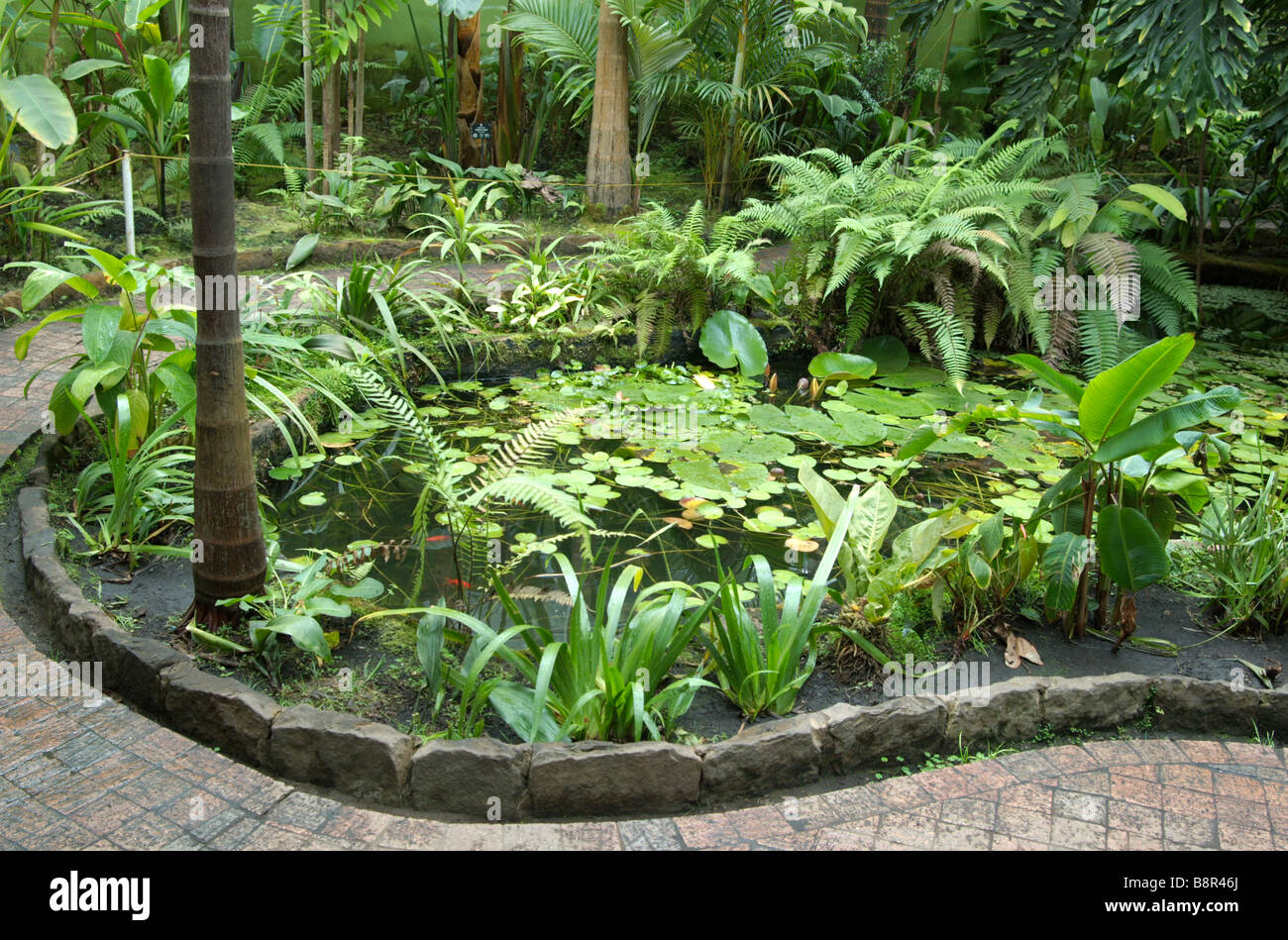 Plants and fauna in an indoor greenhouse bogota botanical for Indoor botanical gardens