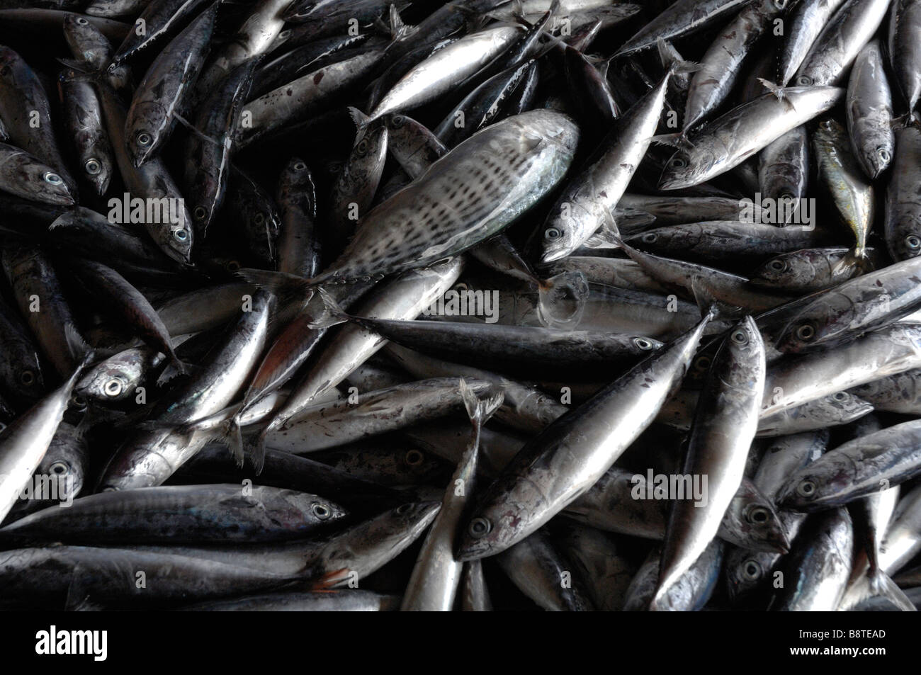 Fish for sale semporna wet fish market semporna sabah for Stock fish for sale