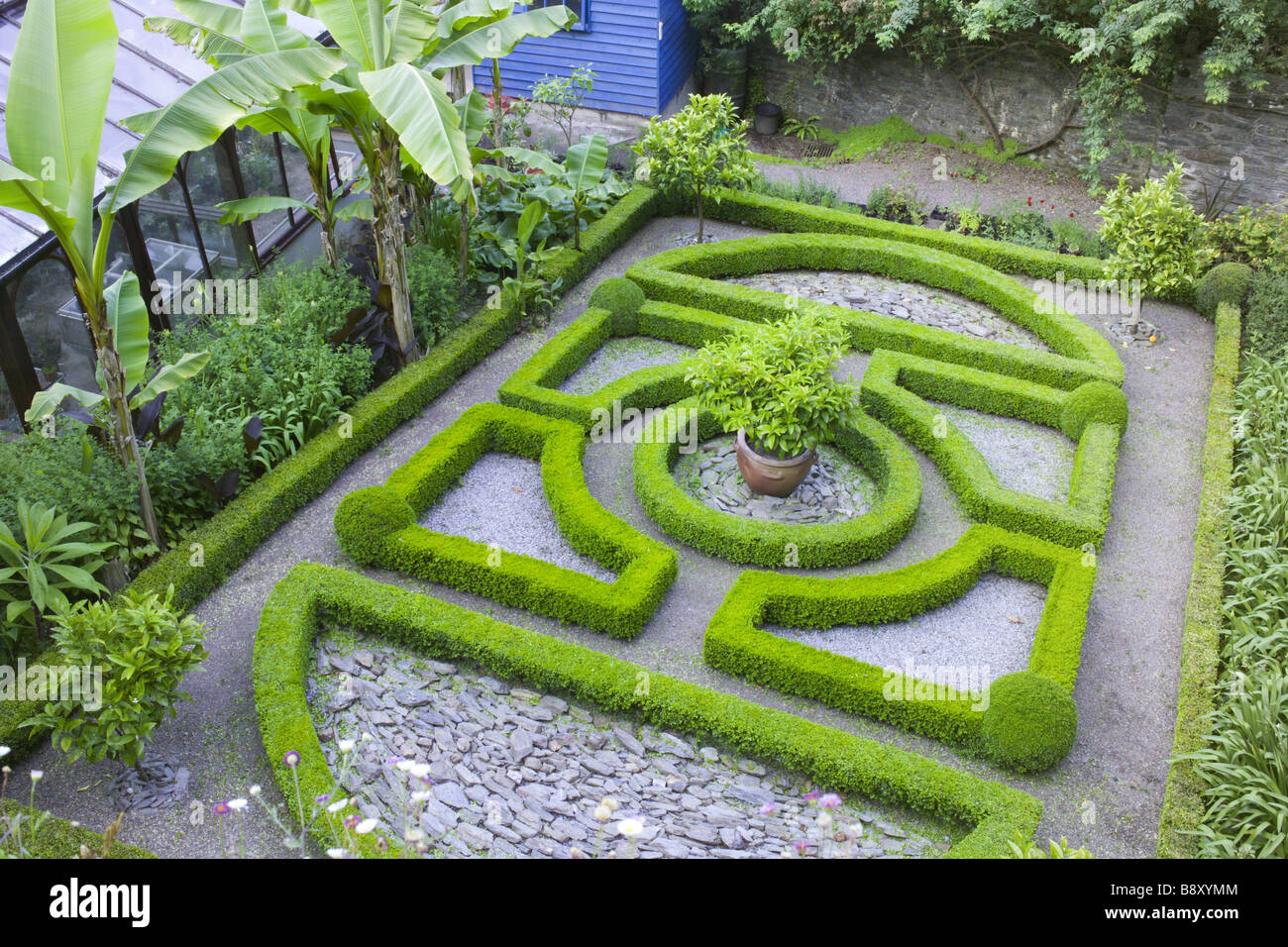 The small knot garden with dwarf box hedging at overbecks for Tudor knot garden designs