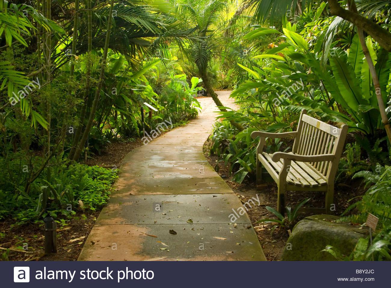 Footpath Passing Through A Rain Forest, Quail Botanical Gardens, Encinitas,  San Diego County, California, USA