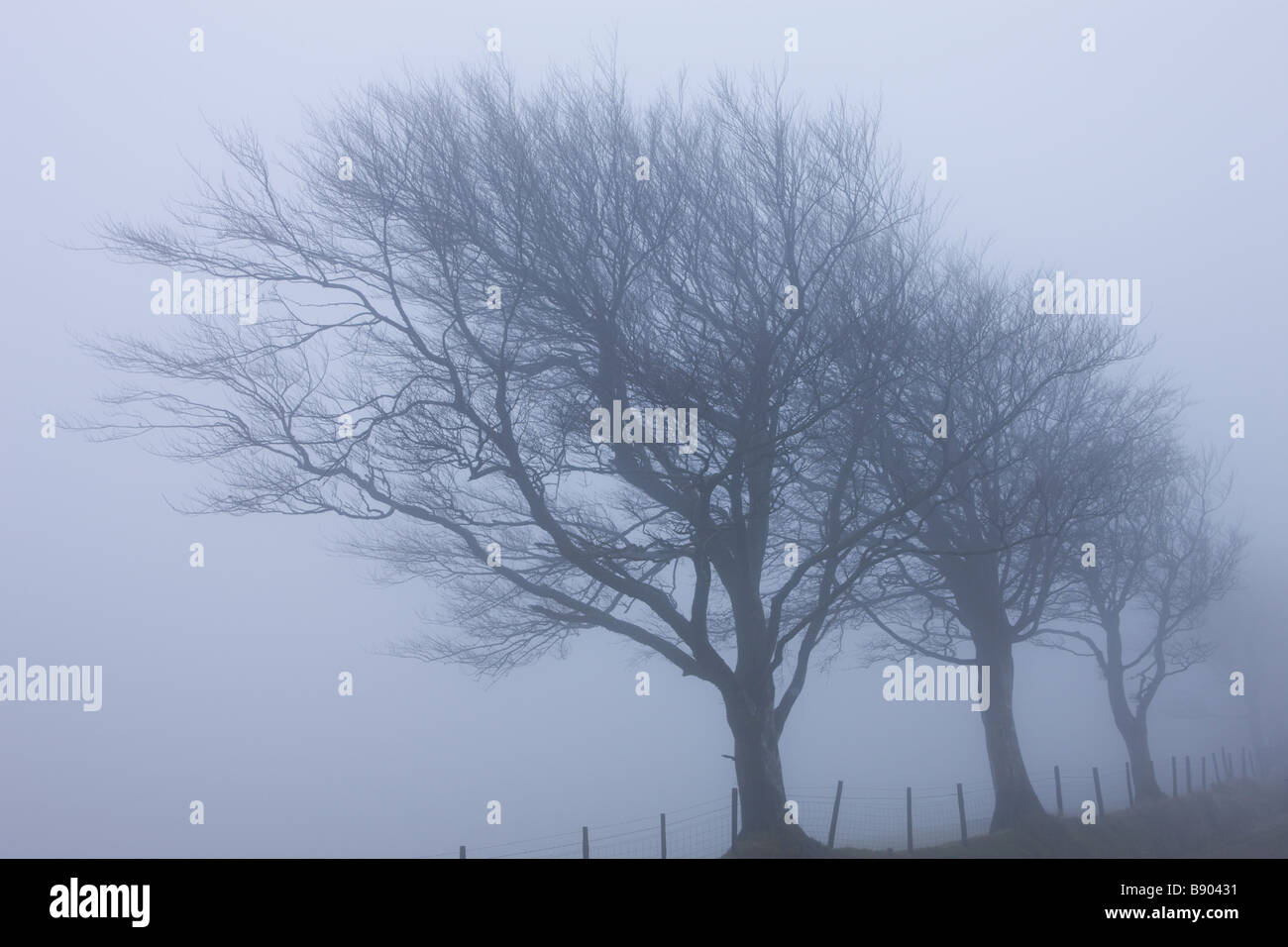 building fog trees - photo #13