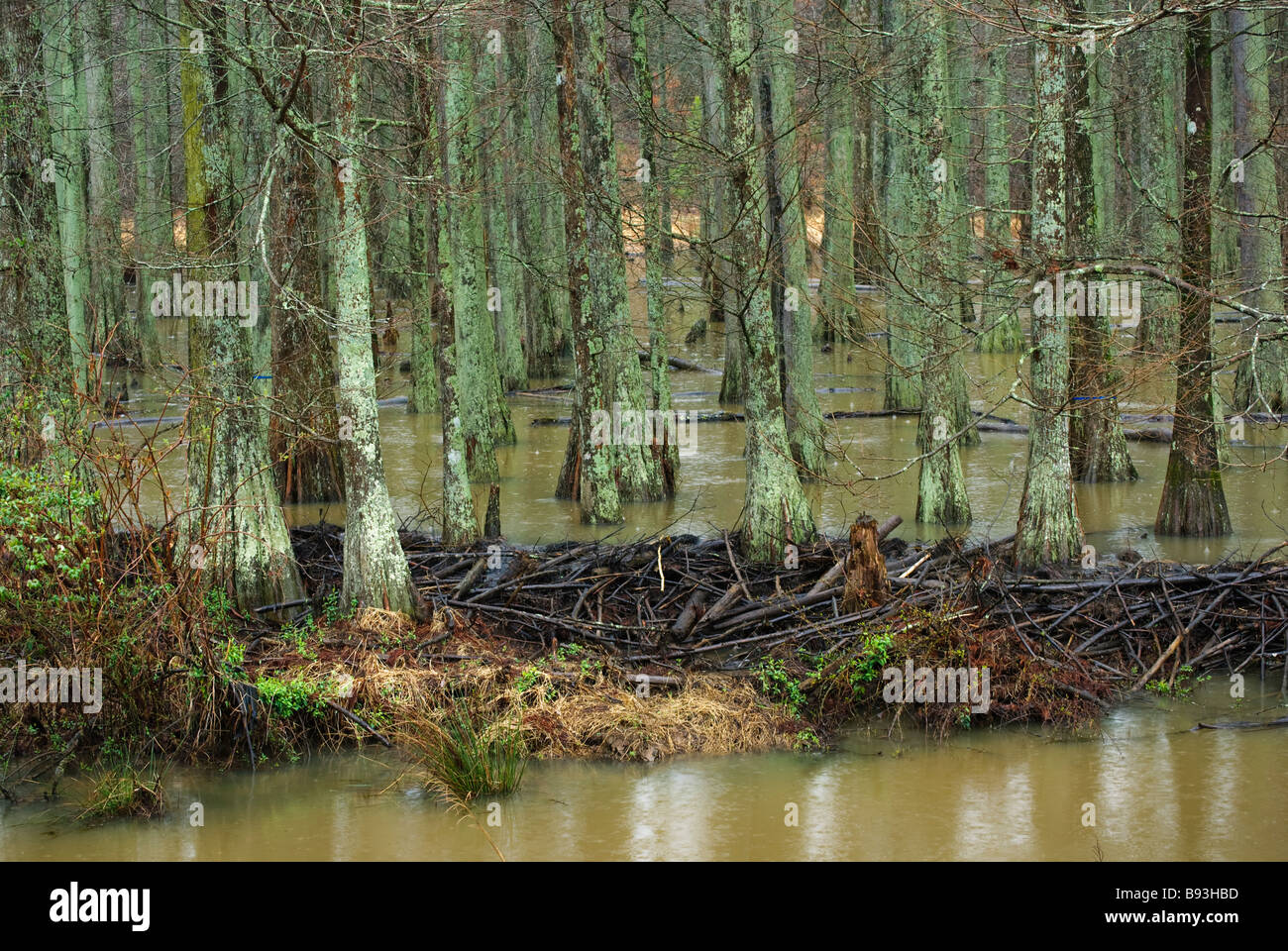 Wetland Tours  Atchafalaya National Heritage Area