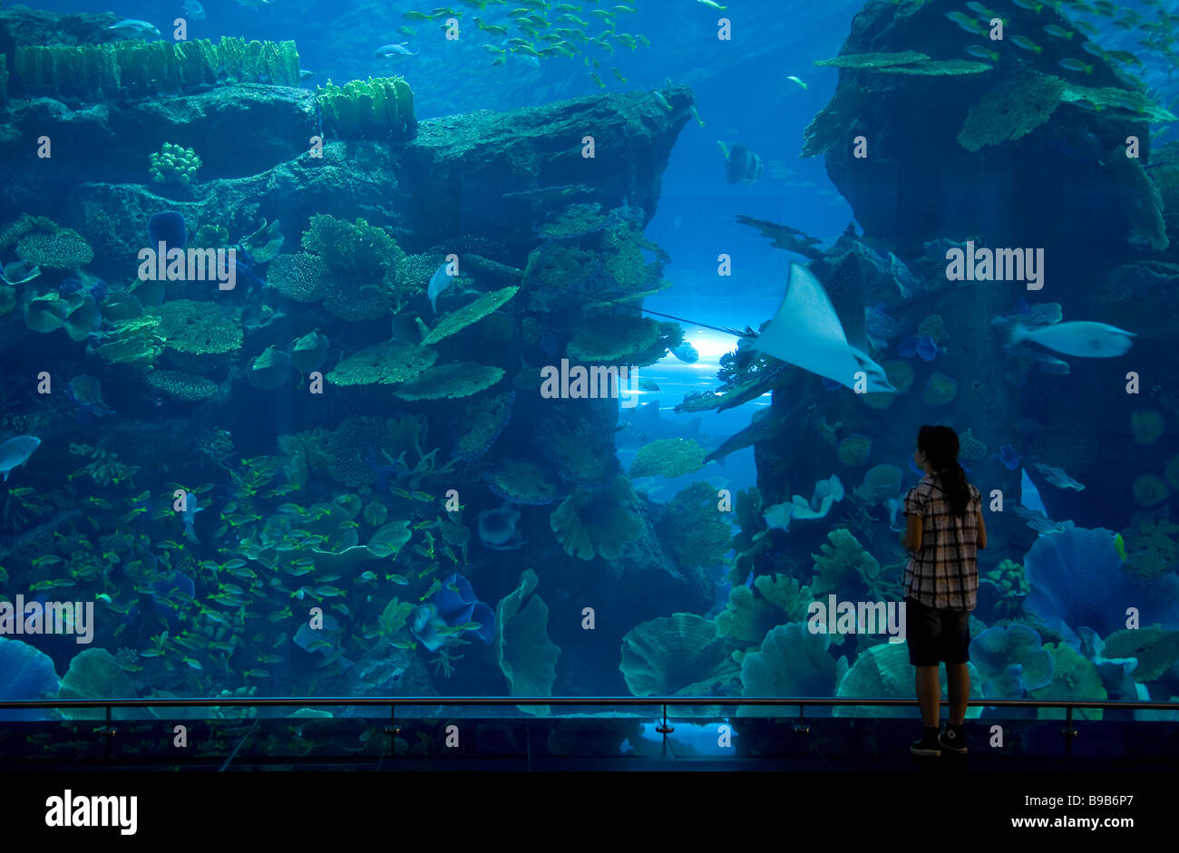 Fish aquarium in uae - Aquarium In Shopping Mall Dubai Uae