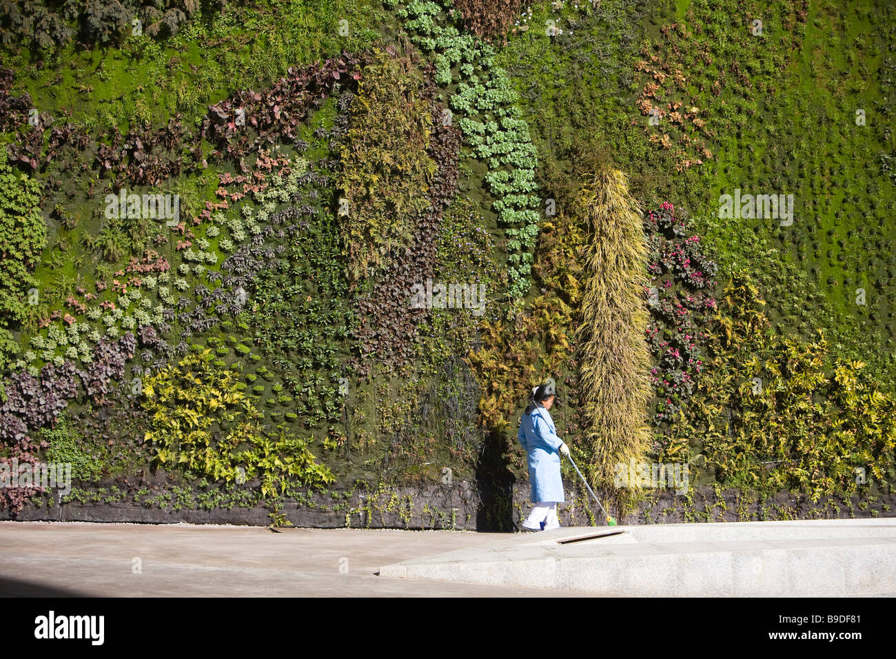 Stock Photo   Vertical Garden By Patrick Blanc Caixa Forum Foundation  Madrid Spain