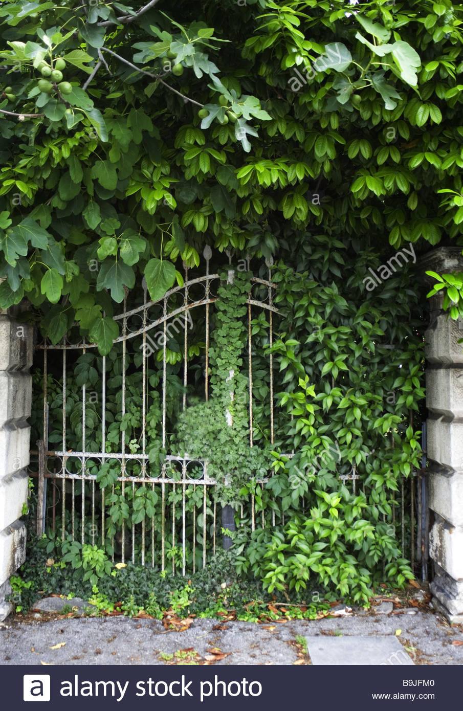Wrought iron garden gate - Overgrown Garden Gate Plants Gate Smithy Iron Gate Wrought Iron Heals Descended