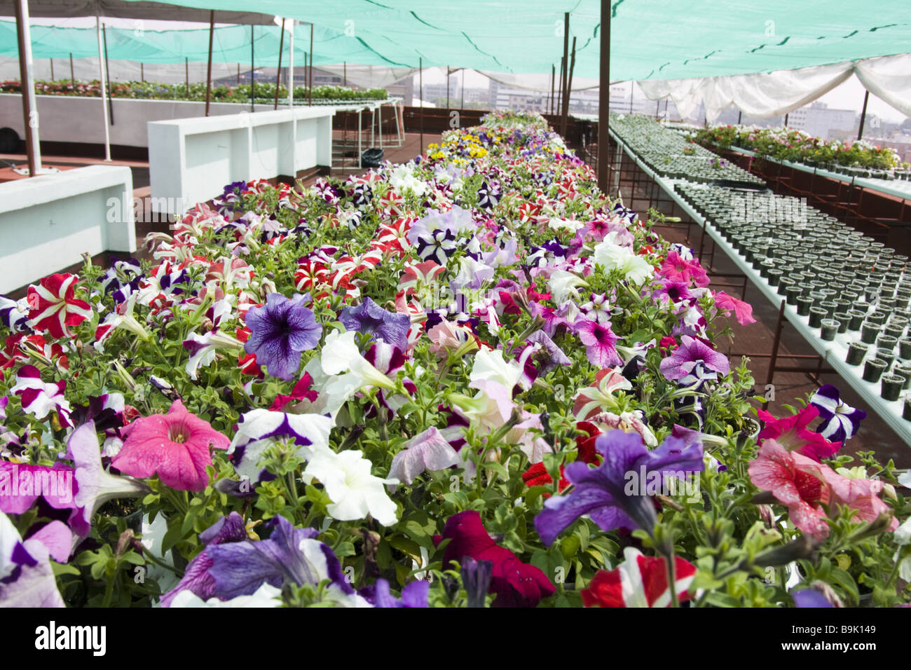 Flowers grow from plastic cups in the expansive roof for Rooftop flower garden