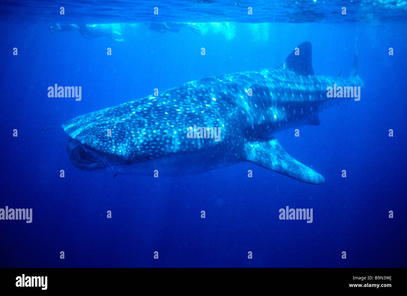 Australia Western Australia The Indian Ocean Off Exmouth Stock - Biggest ocean in the world