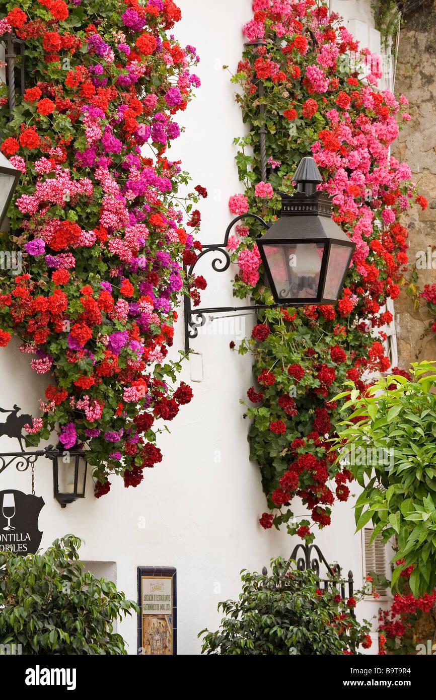 Balcones y rejas con flores c rdoba andaluc a espa a for Balcones con plantas