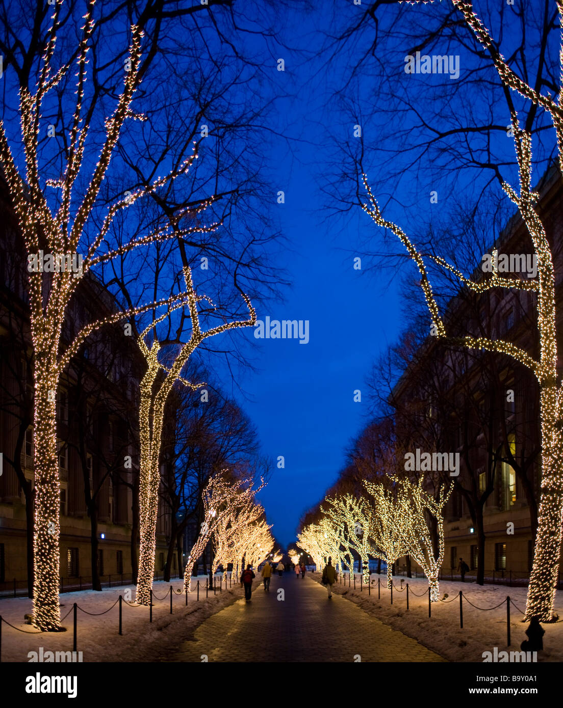christmas lights on trees in the columbia university campus manhattan new york city usa - Newest Christmas Lights
