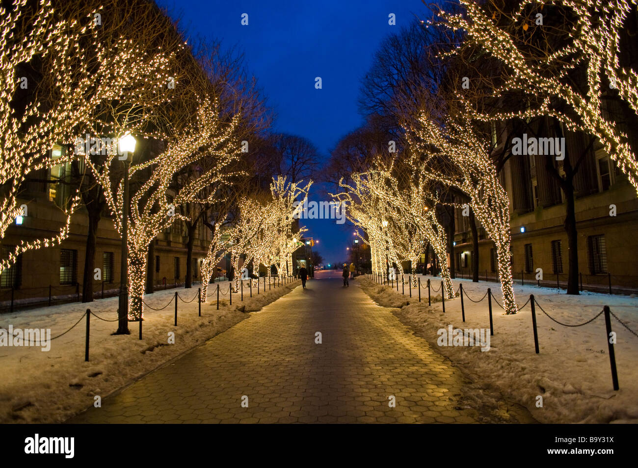 Christmas Lights On Trees In The Columbia University