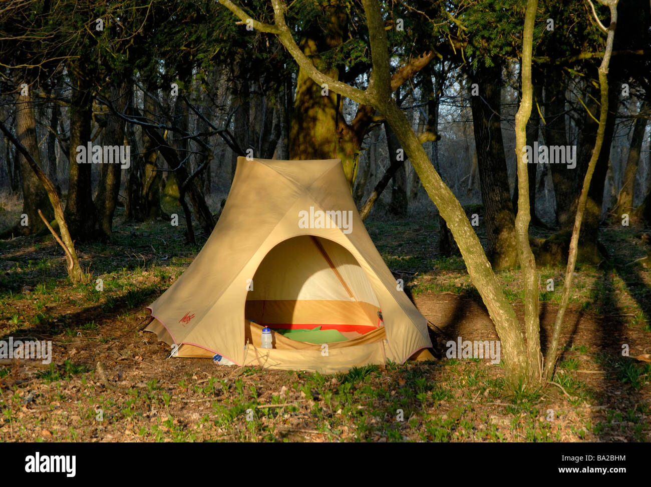 Morning light on dome tent in a wood on the South Downs Way Littleton Down West Sussex England & Morning light on dome tent in a wood on the South Downs Way Stock ...