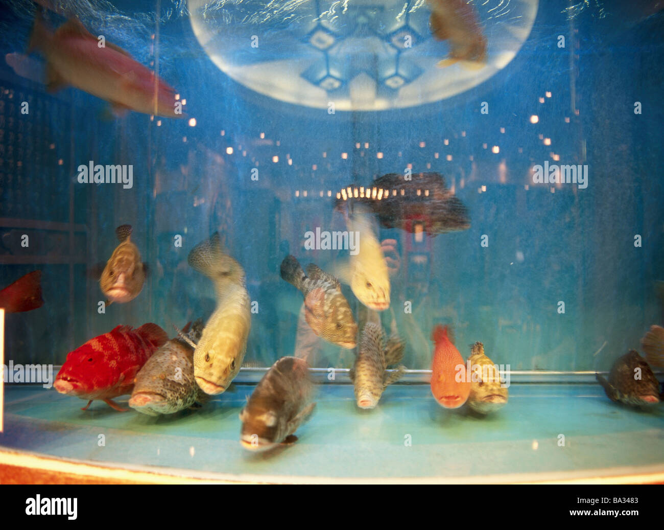 Freshwater aquarium fish from asia - China Hong Kong Iceland Restaurant Detail Aquarium Fish Asia City City Tourism Gastronomy Pub Fish