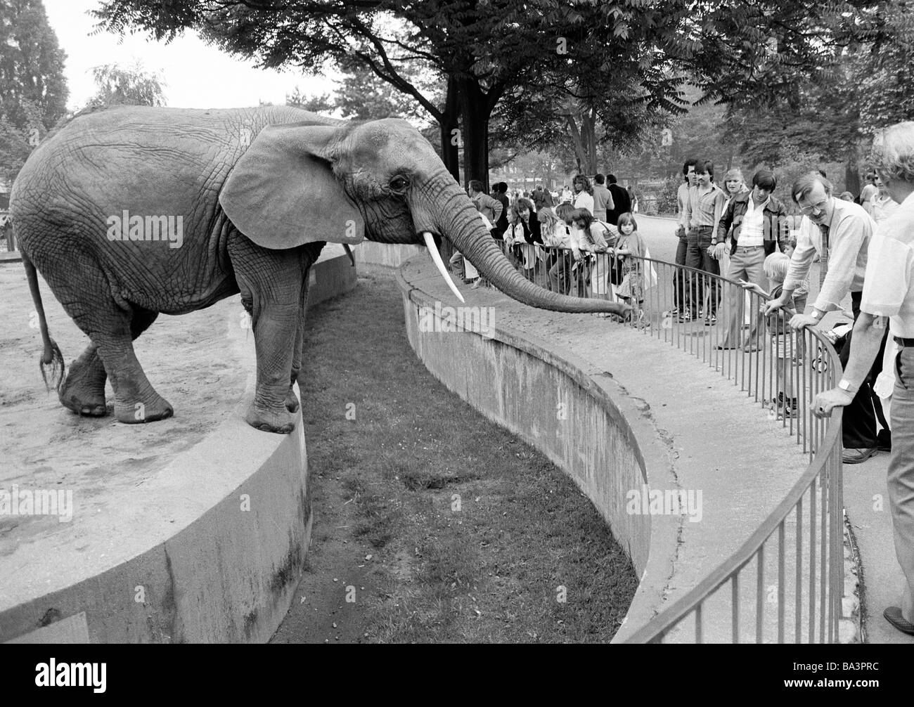 eighties black and white photo human and animal elephant in the