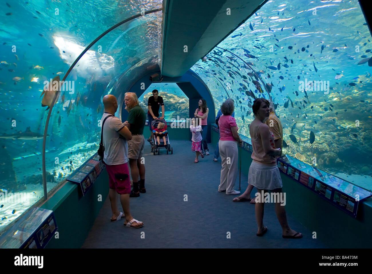Fish tank queensland - Townsville Aquarium Queensland Australia Tunnel Walkthrough Stock Image