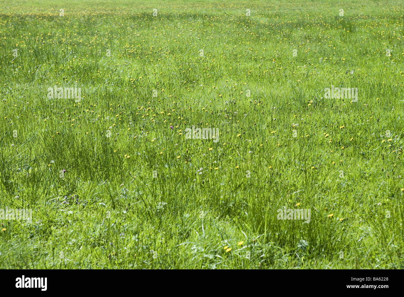 beddingmeadow nature grassland meadow grass grassgreen flowers  - beddingmeadow nature grassland meadow grass grassgreen flowersmeadowflowers empty nobody