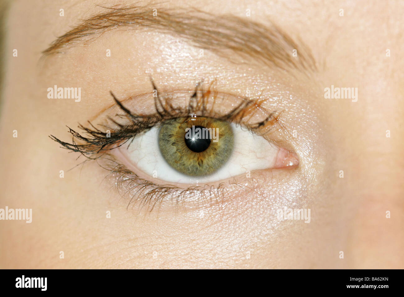 Woman young eye close-up face Sinnesorgan perception gaze camera ...