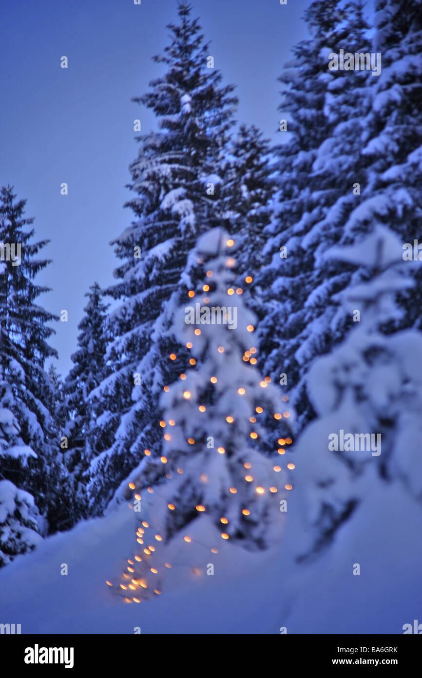 Forest Park Christmas Lights