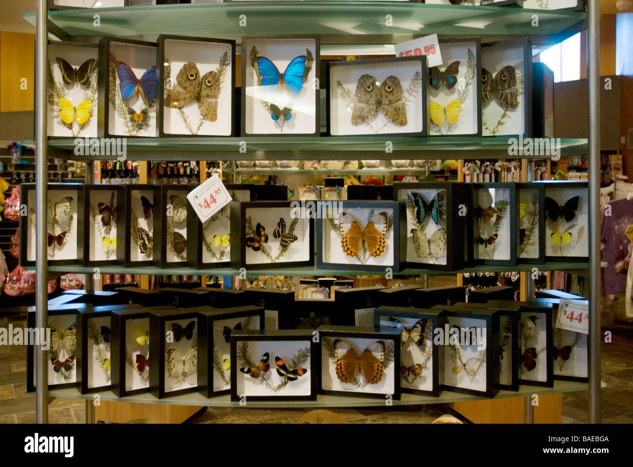 Butterfly Conservatory store Niagara Falls Ontario Canada Stock ...