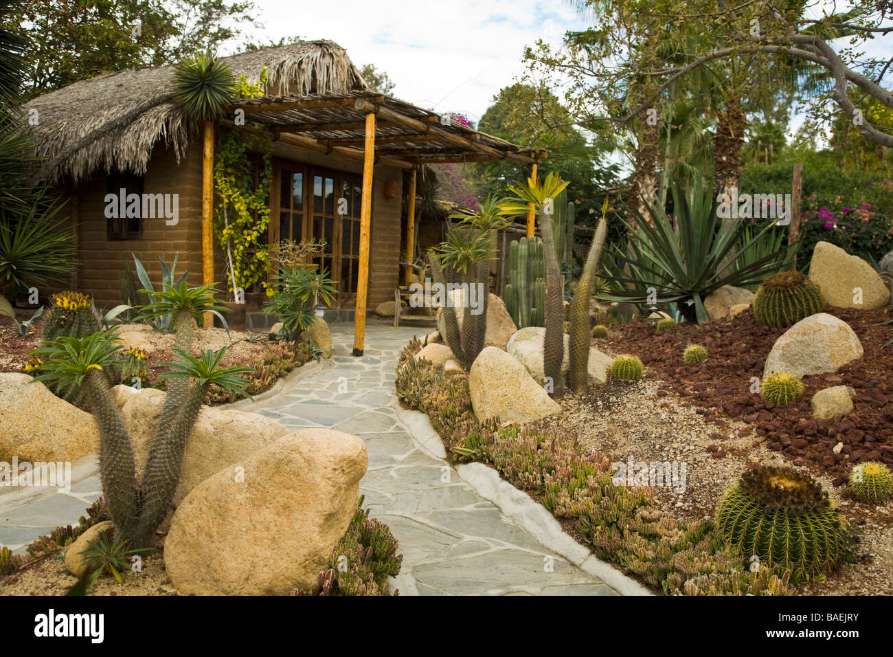 mexico todos santos los adobes restaurant and cactus garden serving upscale mexican food