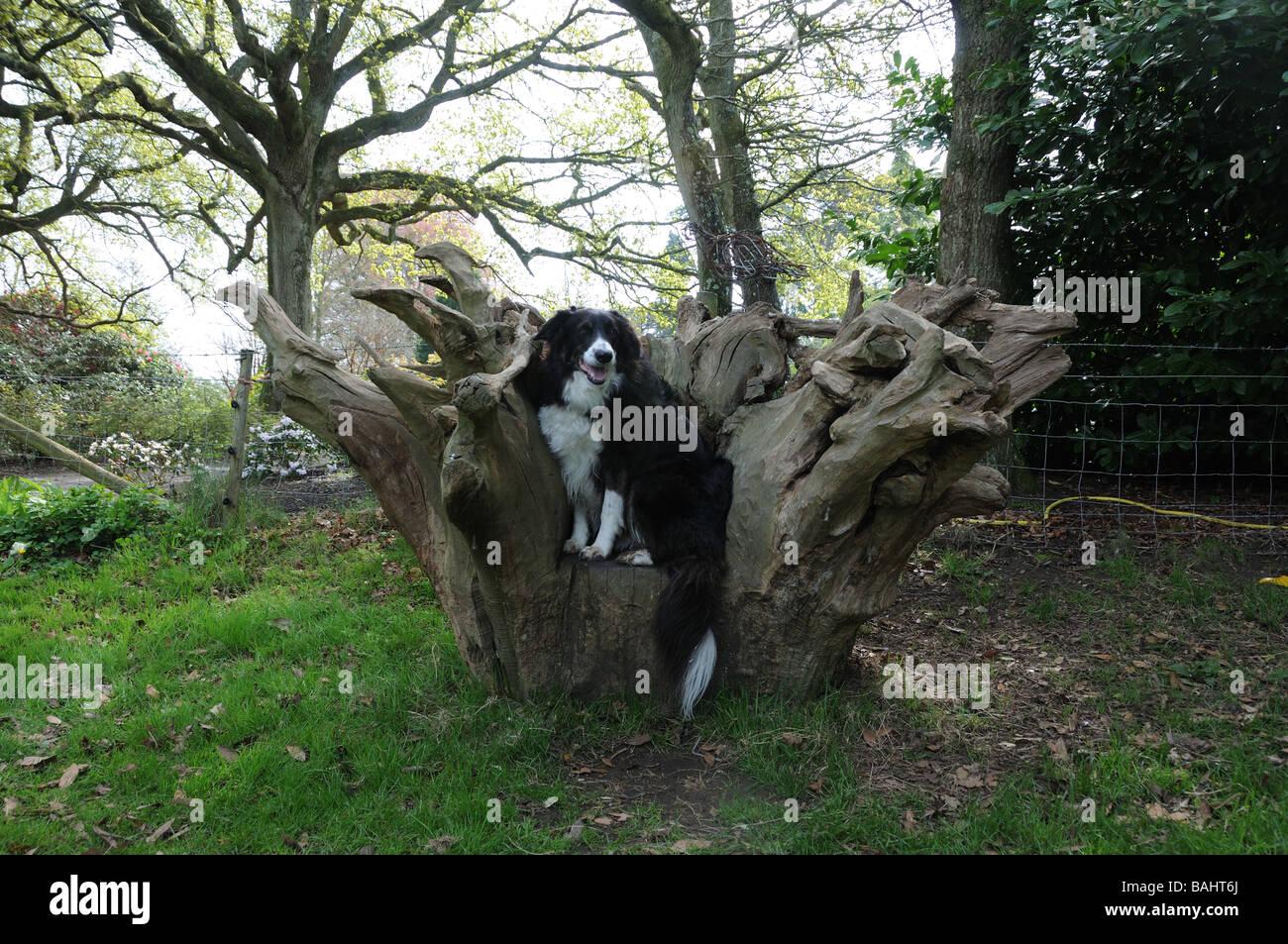 Tree Stump Seats Dog On Tree Stump Seat Stock Photo Royalty Free Image 23749114