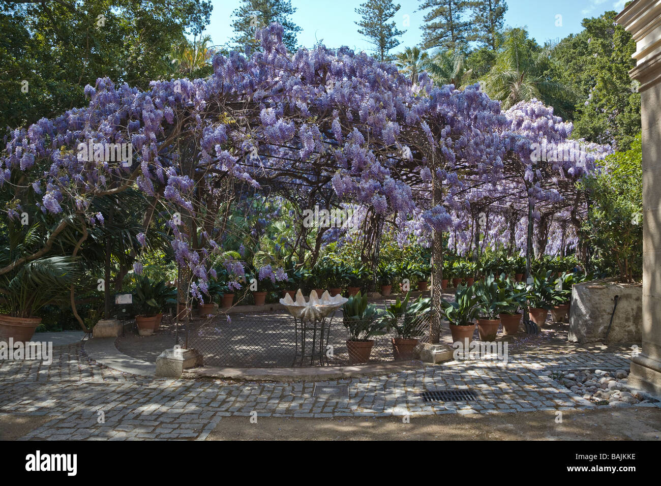 Wisteria Sinensis Growing Over Pergola At La Concepcion Historical Botanical Gardens Malaga Spain