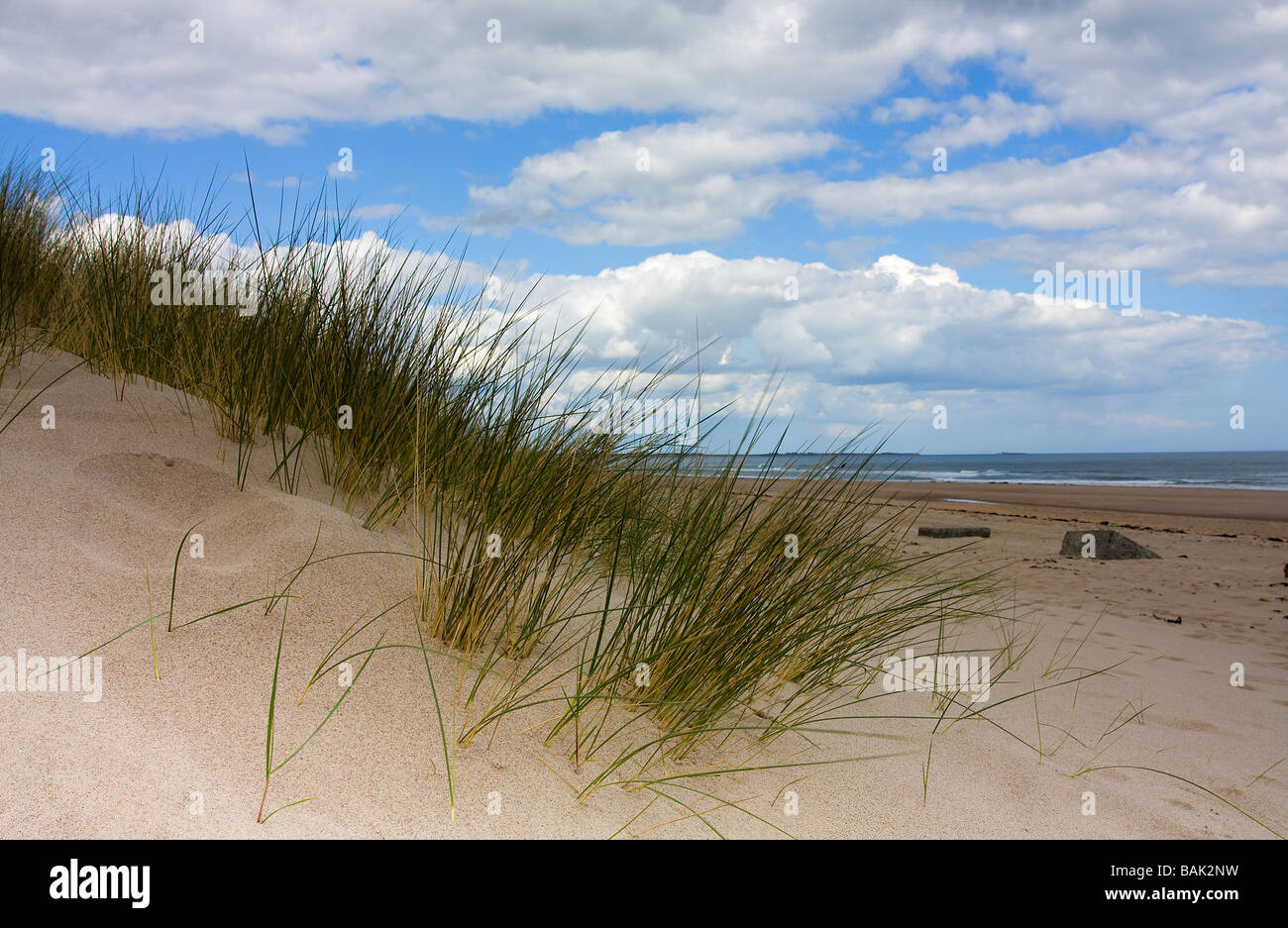 View Of Grass And Sand Dunes Cresswell Beach North East