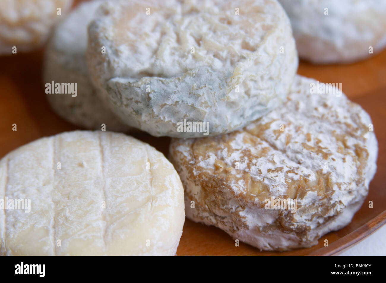 Saint-Marcellin France  City pictures : Saint Marcellin Cheese Of Varying Maturity Dom A Voge Cornas Rhone ...