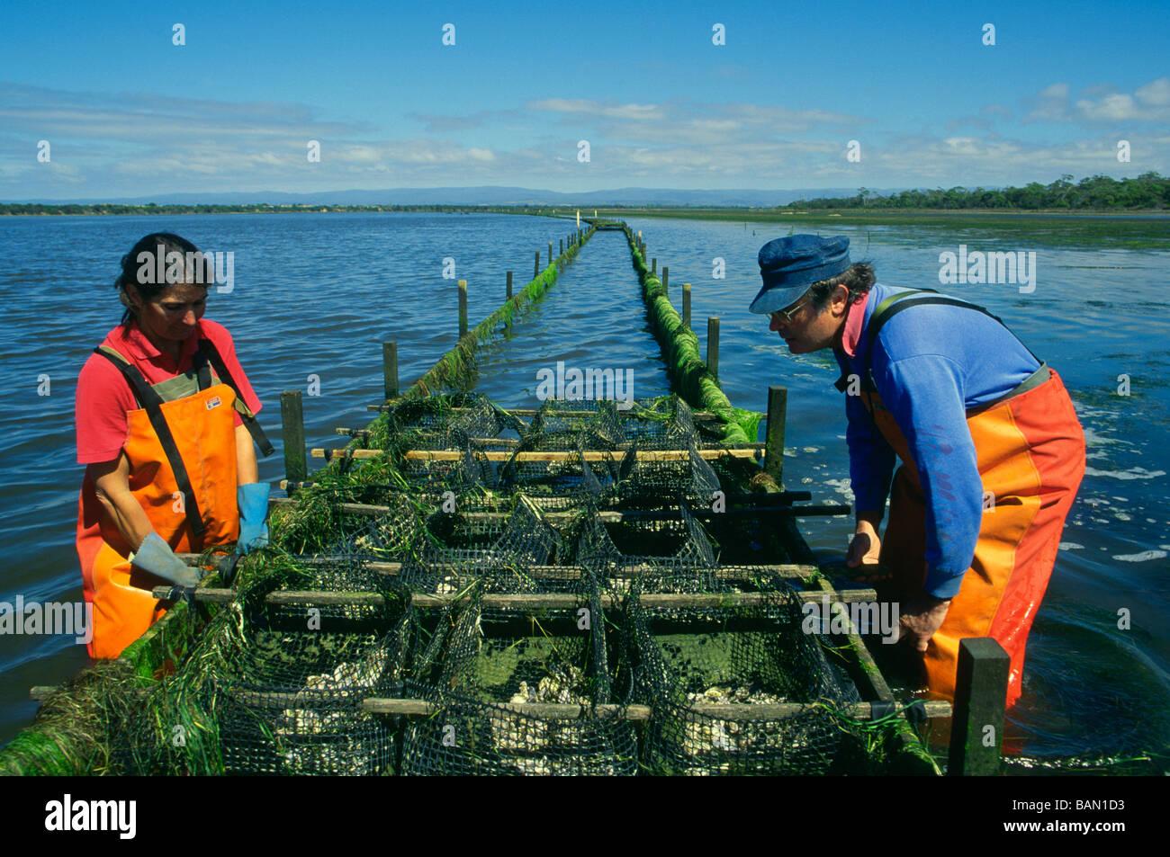Oyster farming Freycinet Marine Farm Freycinet Peninsula ...