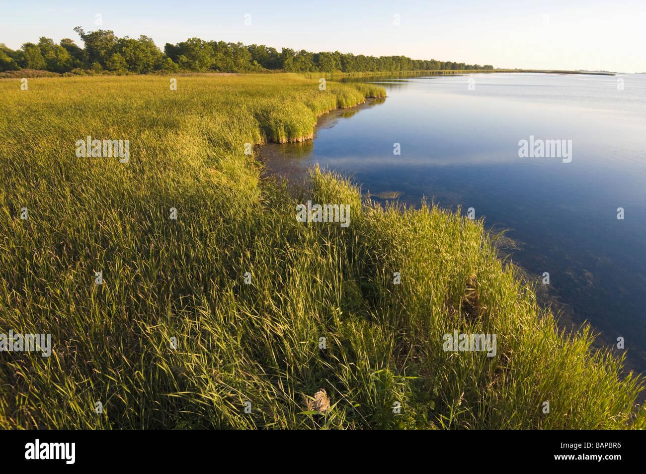 lake erie shoreline marsh rondeau provincial park. Black Bedroom Furniture Sets. Home Design Ideas