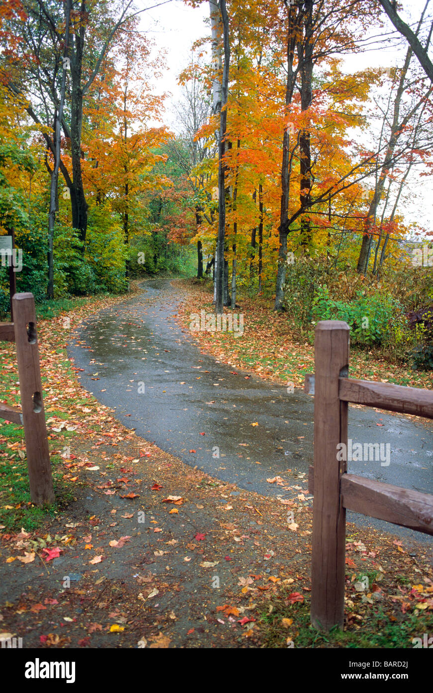 New Hampshire Vermont New England Fall Color Foliage Leaf