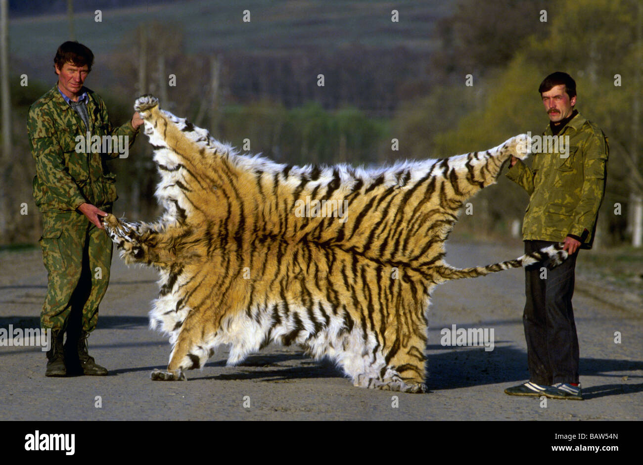 """tiger poaching Noting the """"seriousness"""" of a tiger poaching incident where five tigers were  allegedly killed by poachers inside the state boundaries, the."""