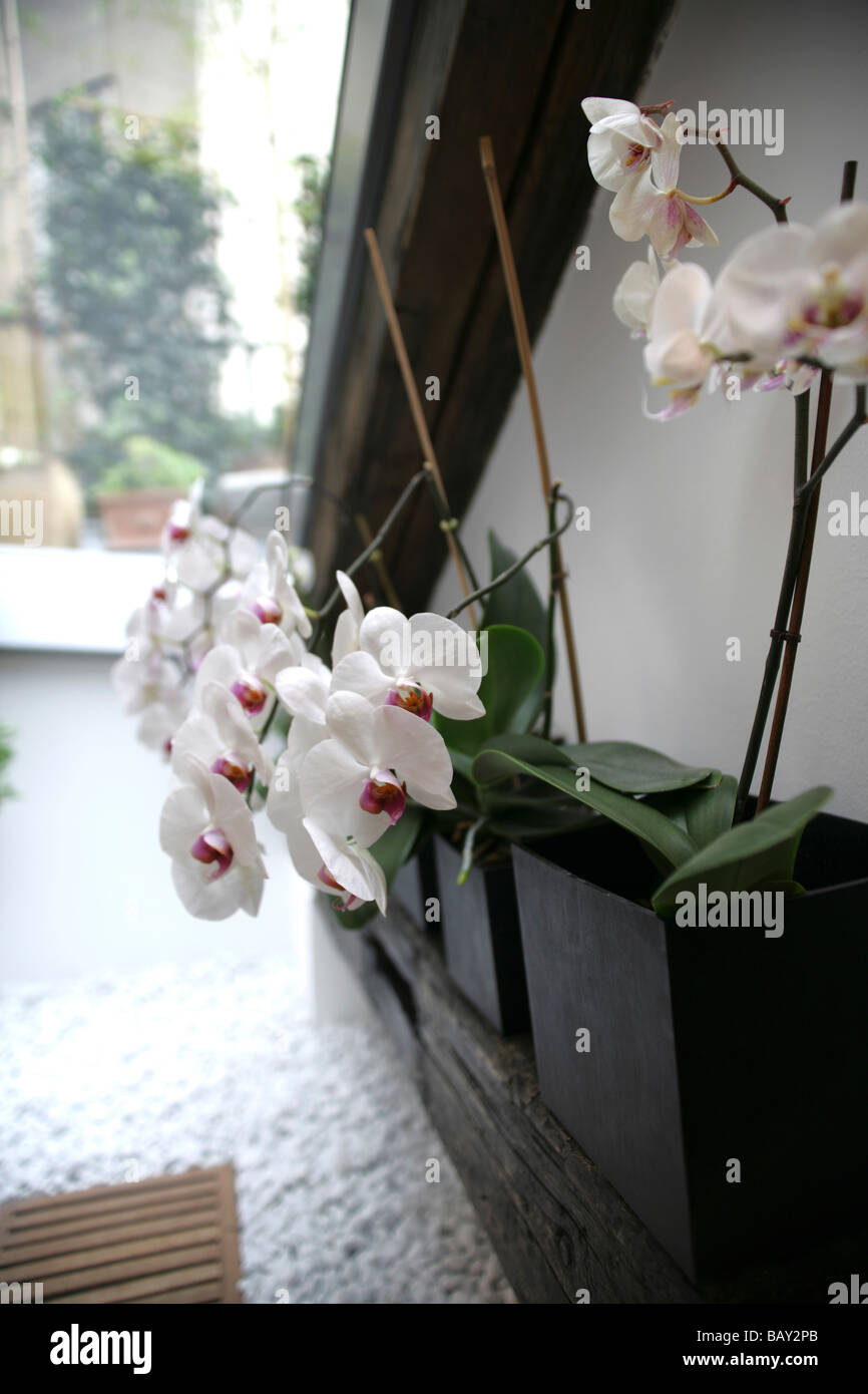 Orchids in vases living room decoration home lifestyle stock orchids in vases living room decoration home lifestyle reviewsmspy