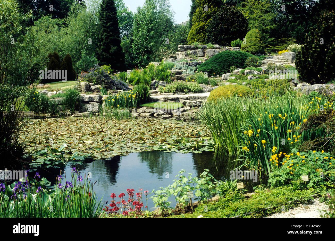 Cambridge botanical gardens garden water ponds plants for Garden pond plants uk