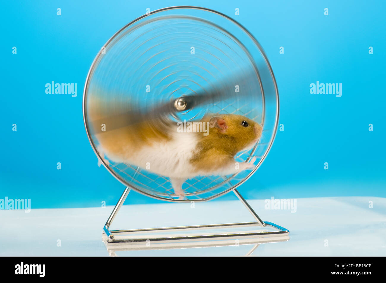Funny Goldhamster Hamster Wheel Speed High Play Playground