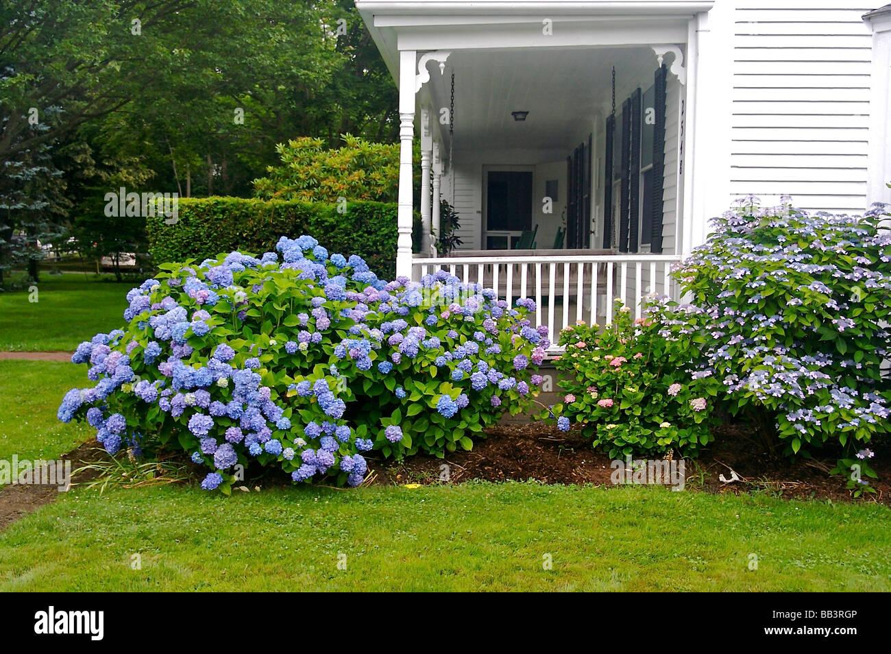 North America Usa Massachusetts Brewster Flowers Surround The