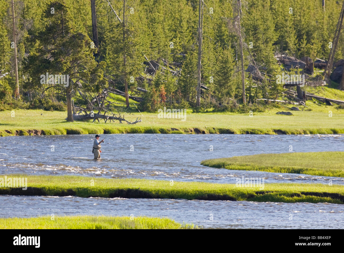 Wy yellowstone national park fly fishing in the for Yellowstone national park fishing