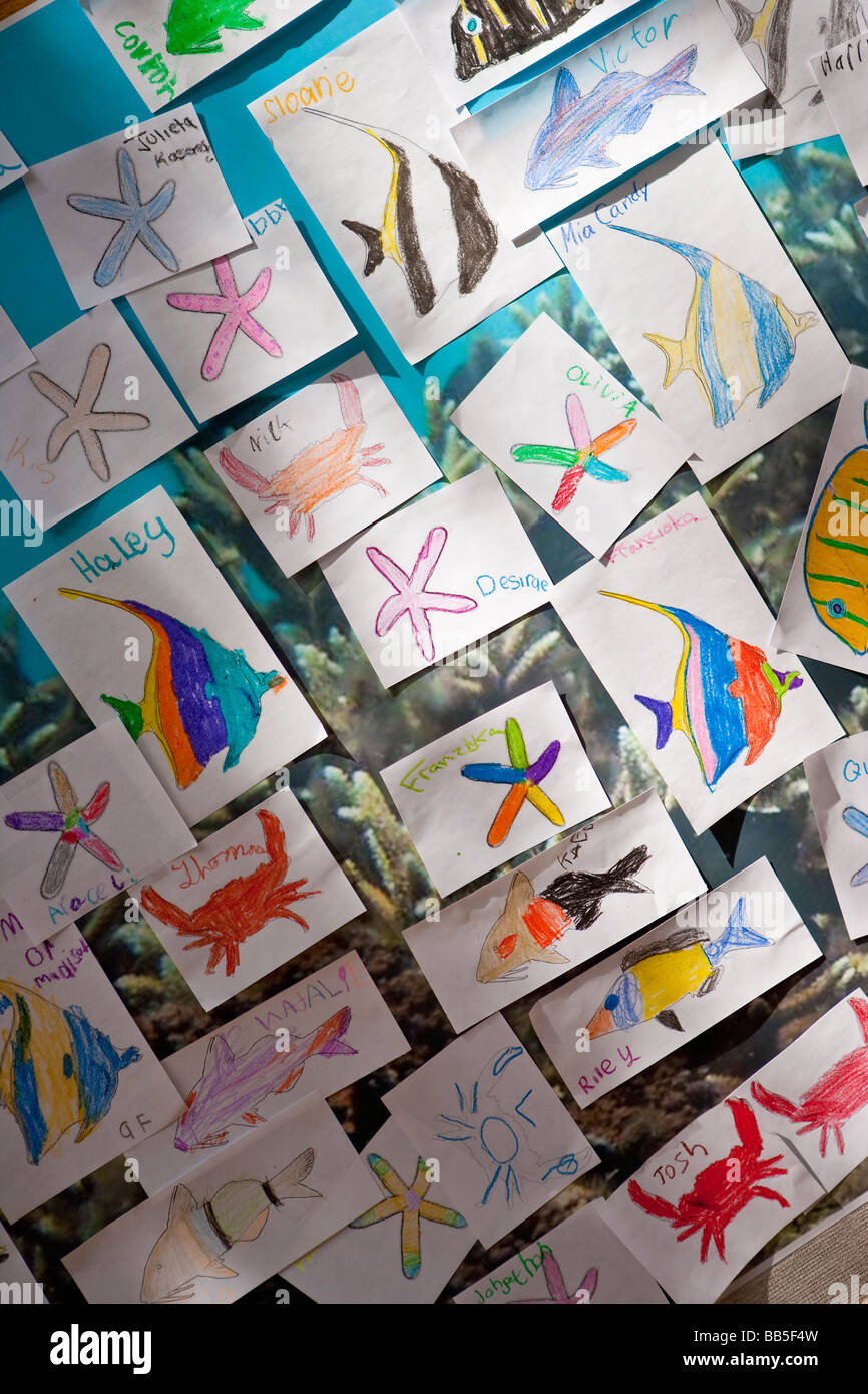 drawings of ocean creatures by grade children earth day