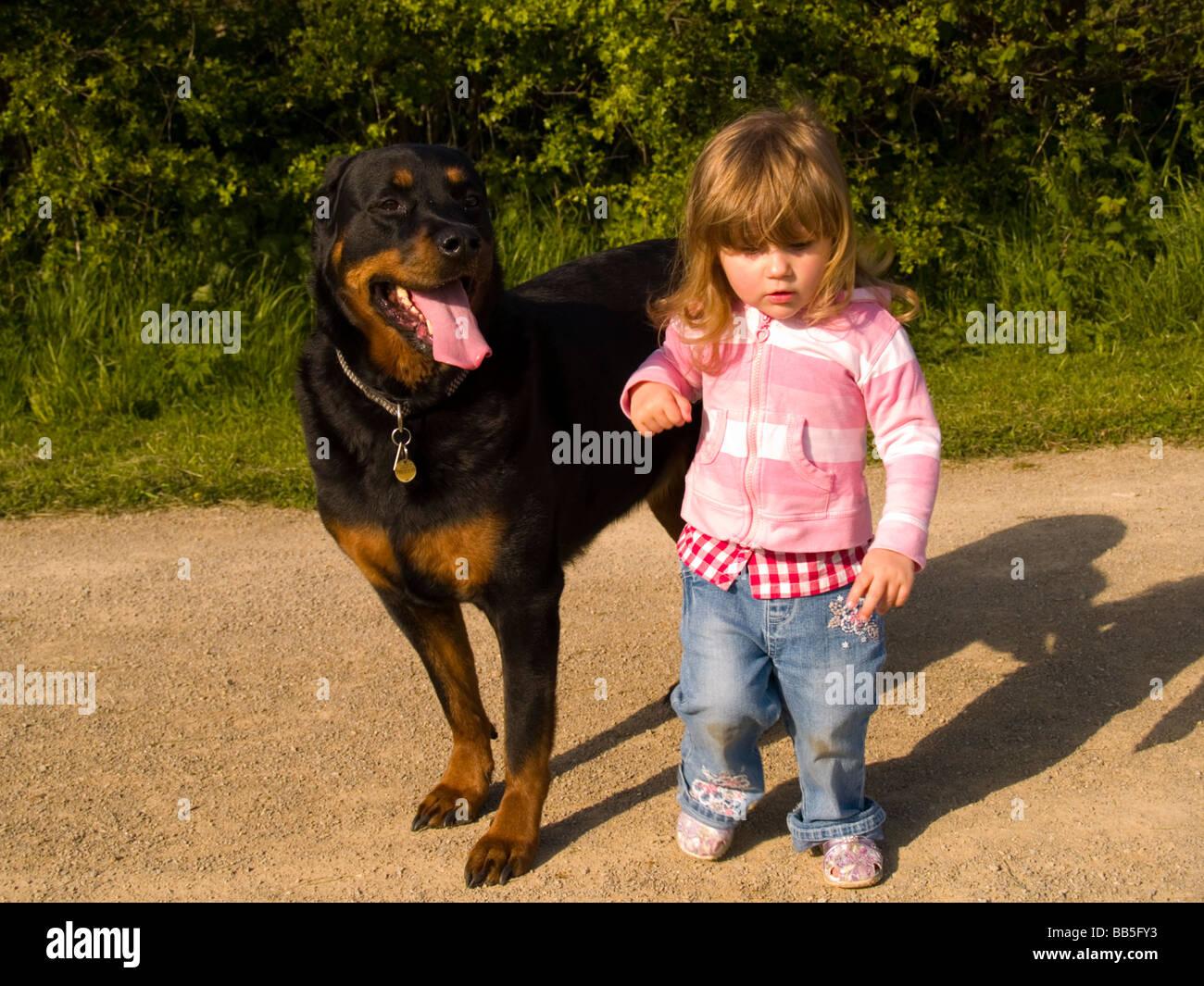 Большой дог и девушка фото 456-453