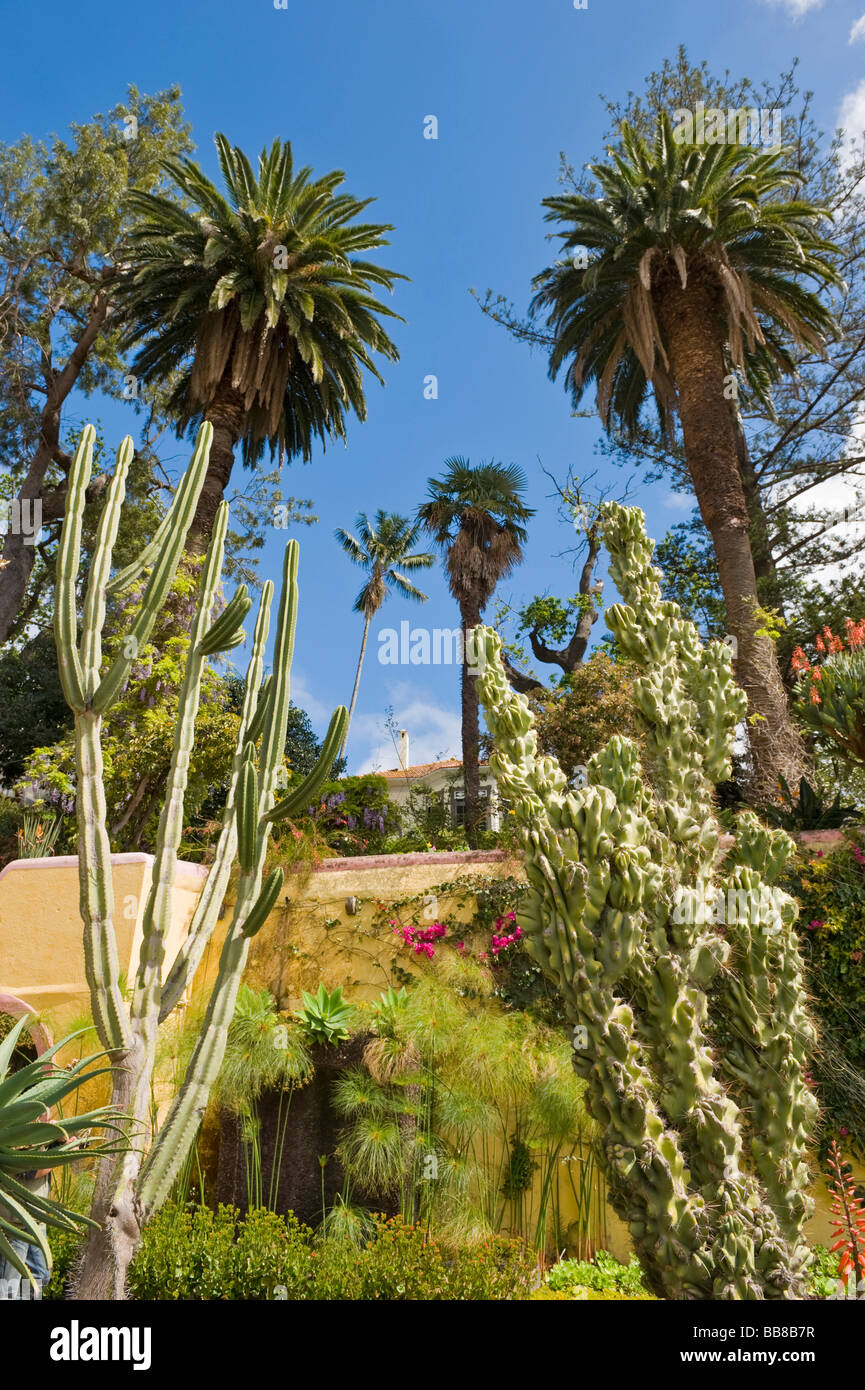 1000+ images about Cactus and palm trees on Pinterest   Name Cactus Palm Tree