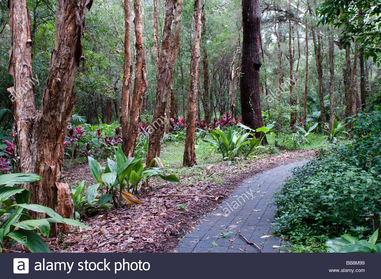 Coffs harbour botanic gardens gum trees nsw australia for Garden design under gum trees