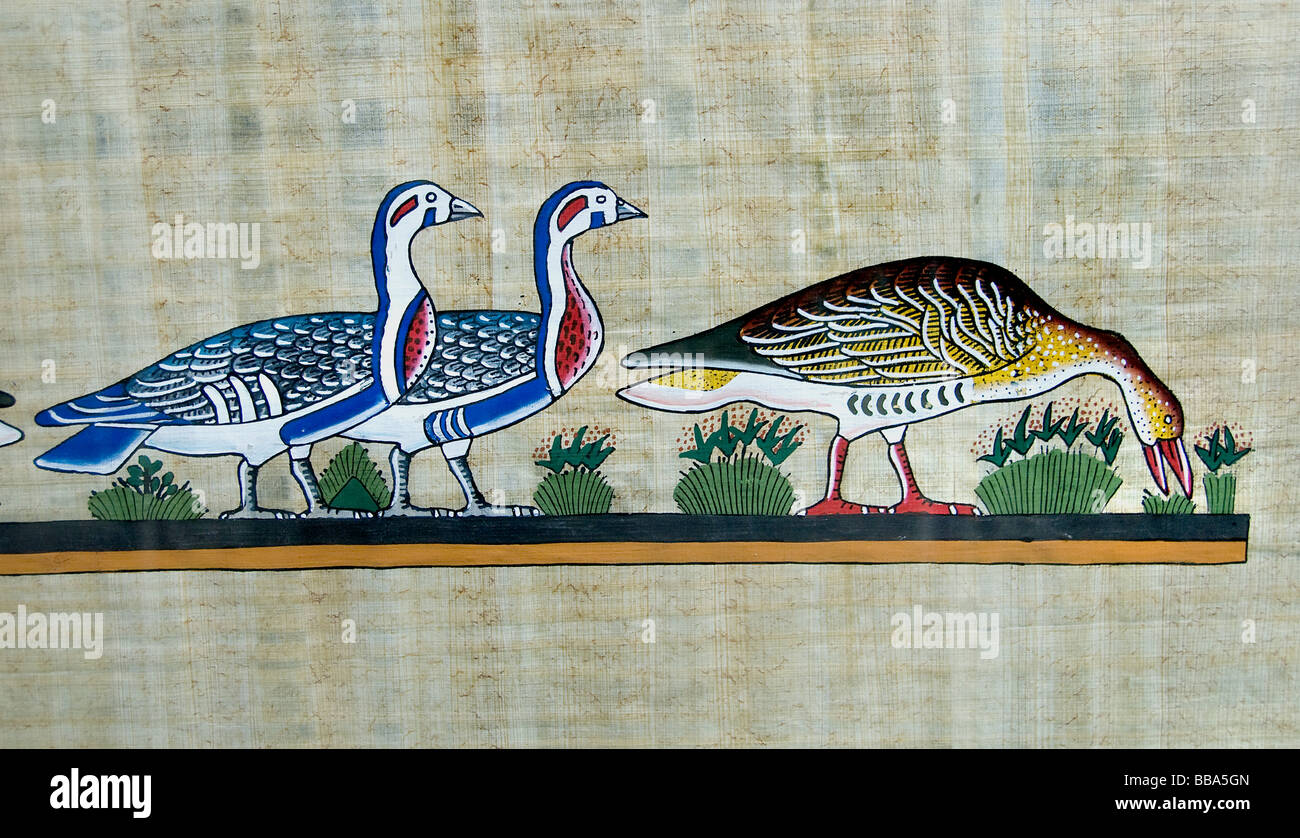 where can i buy papyrus paper Ancient egyptians discovered how to make paper from the stems of plant as early as 3000 bc egyptian papyrus was used as we use paper today buy papyrus where can i buy papyrus artworks almost all egyptian souvenir shops sell papyrus artworks.