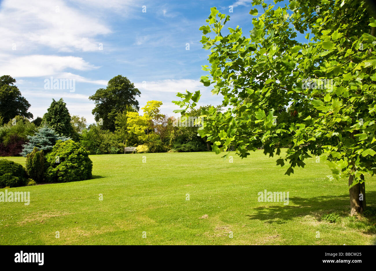 Large trees shrubs and bushes around a lawn at waterperry for Large bushes for landscaping