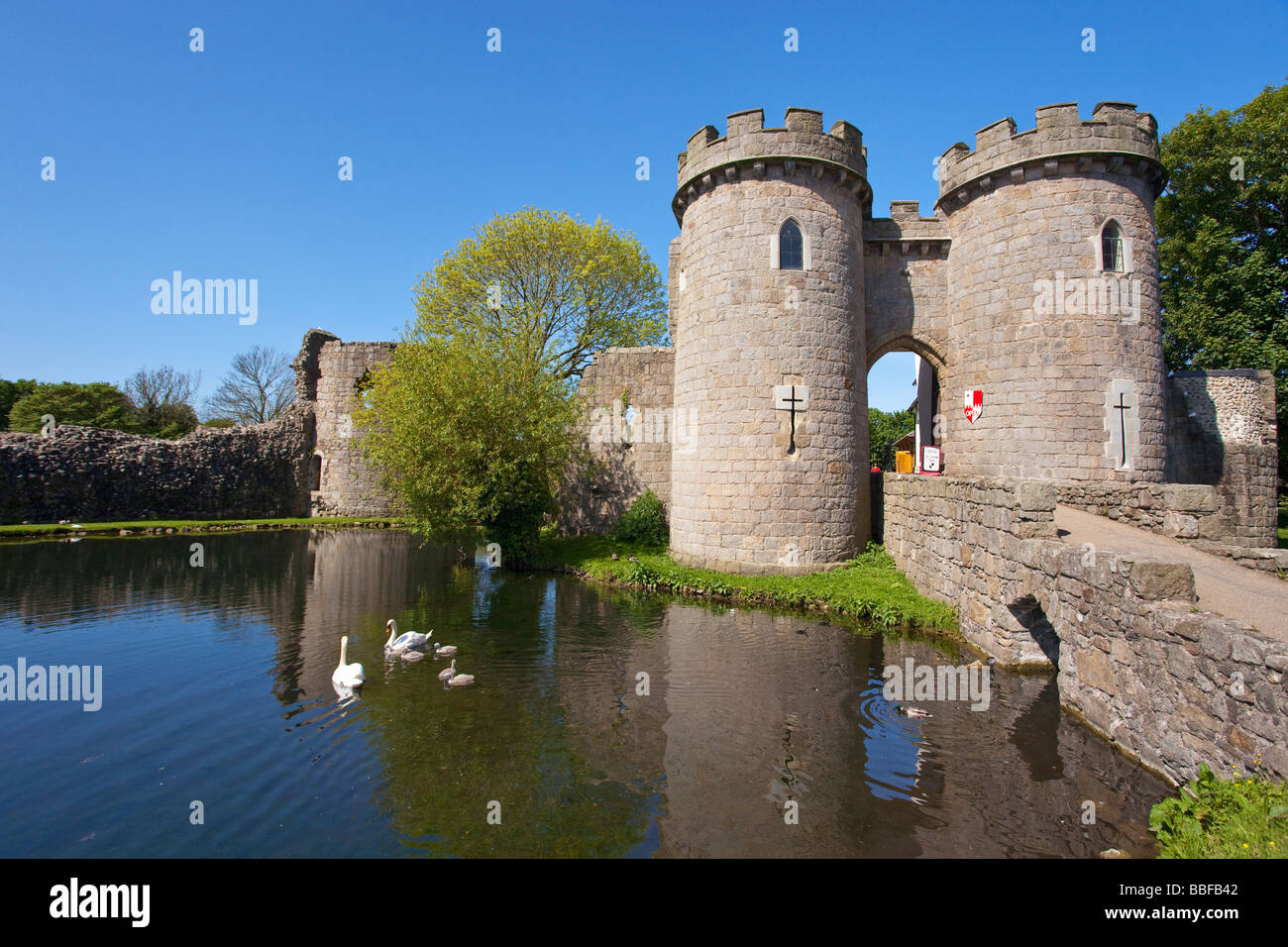 Mute Swan Family Cygnus Olor In Moat At Whittington Castle