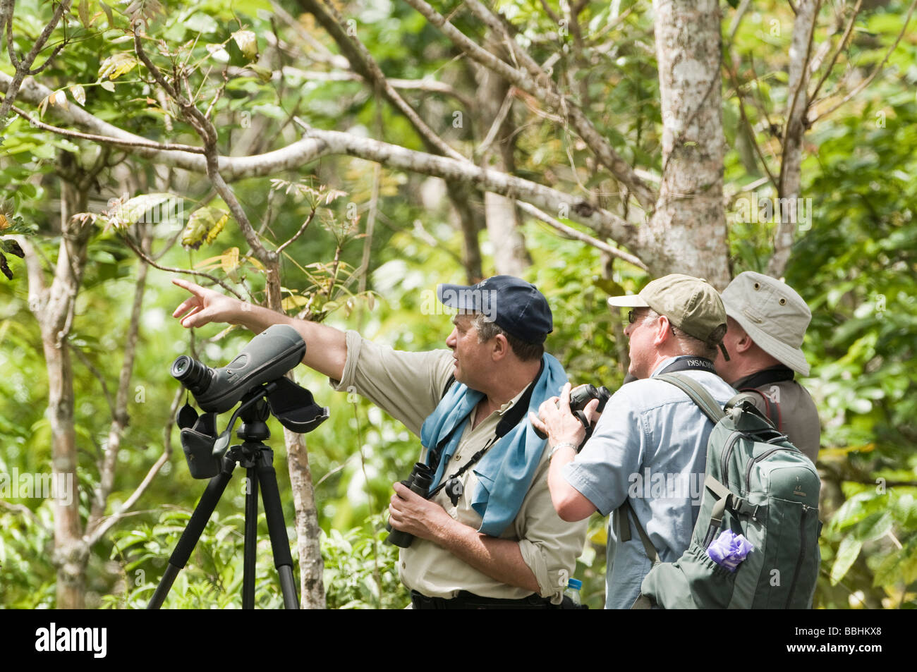 Alcoy (Cebu) Philippines  city pictures gallery : Birders Searching For Cebu Flowerpecker In Alcoy Forest Cebu Stock ...