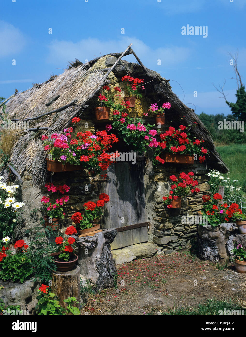 Flower Covered Garden Shed In Rural Brittany