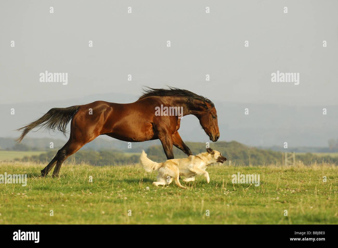 animals horse running free - photo #23