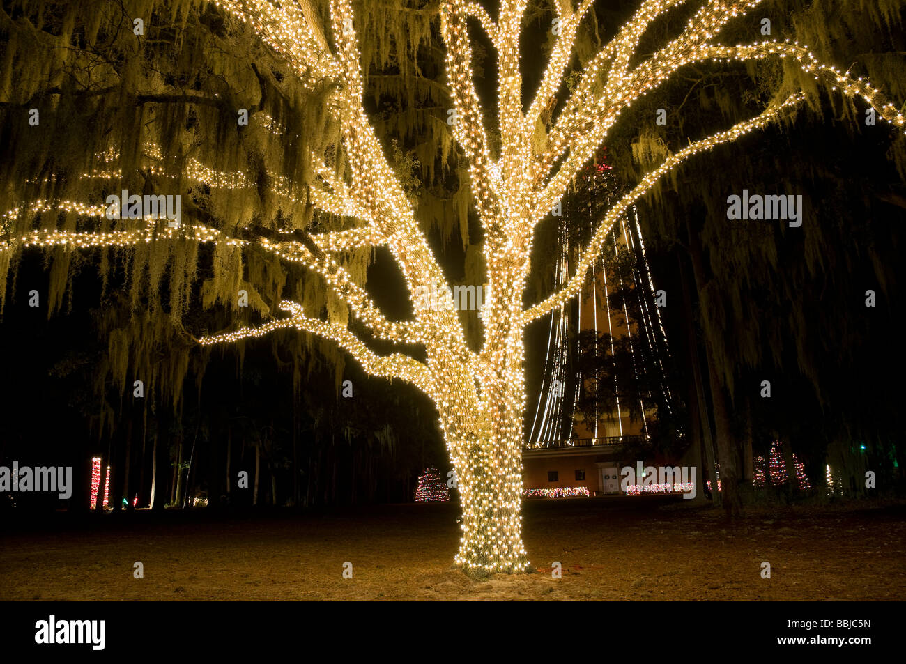 Spanish Moss Christmas Stock Photos & Spanish Moss Christmas Stock ...