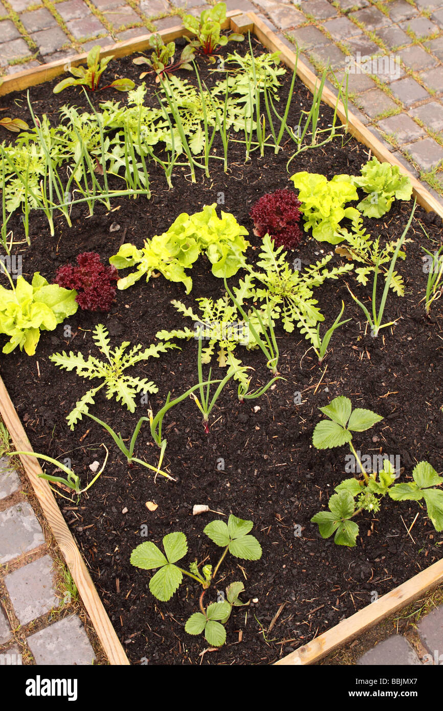 Raised Vegetable Bed Plot On Garden Patio Made From A Wooden Timber Frame  With Summer Vegetables