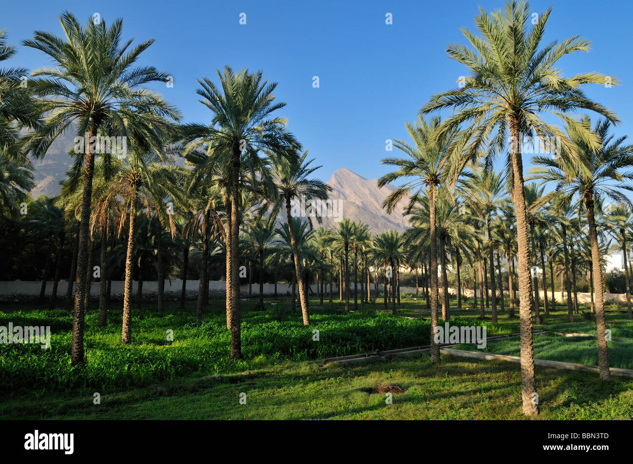 middle eastern singles in palm beach gardens Fun things to do in west palm beach include visiting the norton museum of art and seeing tropical plants from six continents  the ann norton sculpture gardens,.