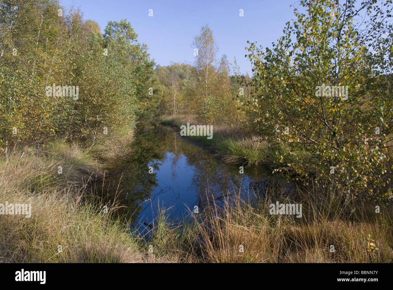 Image gallery swamp geography Habitat deutschland